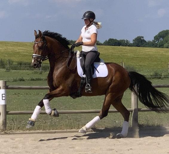 Kategori - Hest